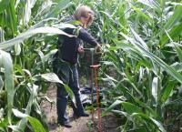 Boring in een maisveld